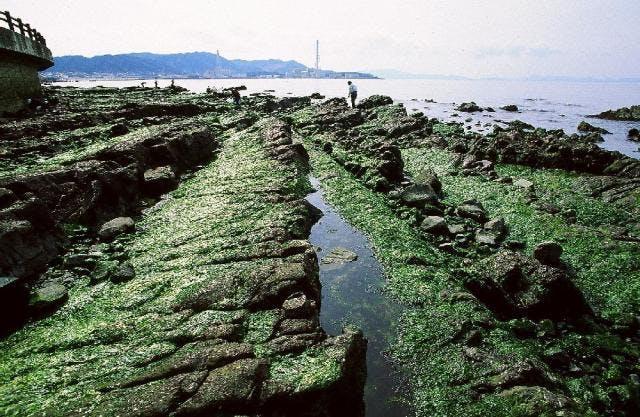 長松自然海浜