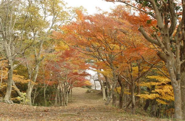 東山公園の紅葉