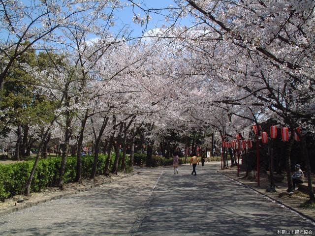 和歌山城の桜並木
