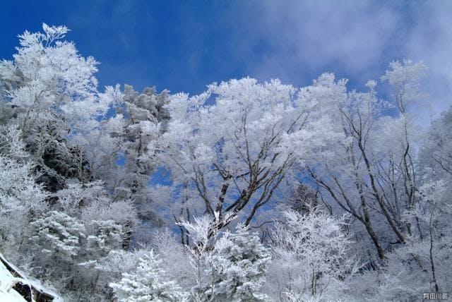 高野龍神スカイライン霧氷