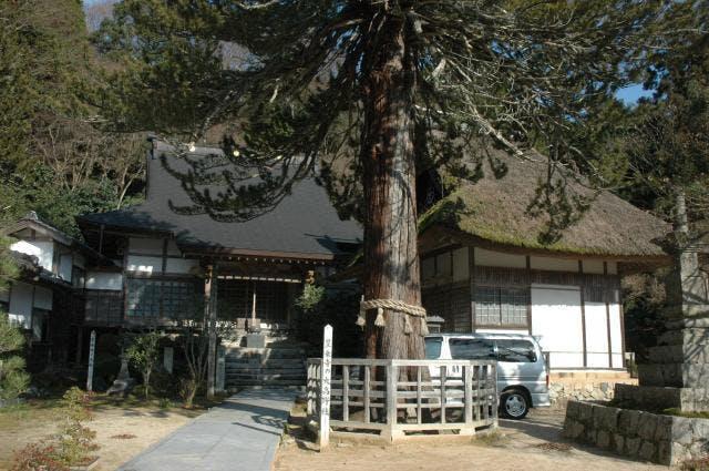 豊乗寺の大杉