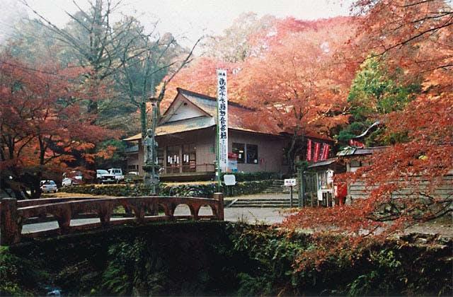 鰐淵寺のモミジ