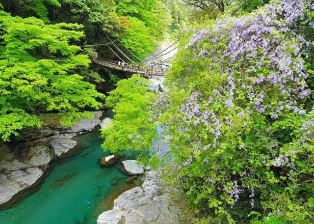 祖谷のかずら橋(春)