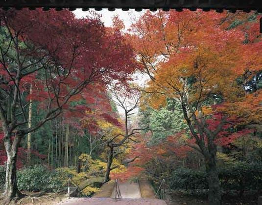 根香寺の紅葉