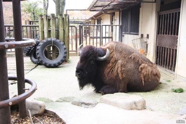 愛媛県立とべ動物園 アメリカストリート