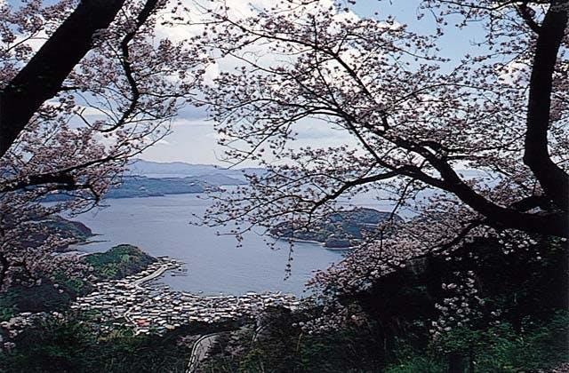 野福峠の桜並木
