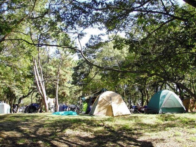 入野松原キャンプ場