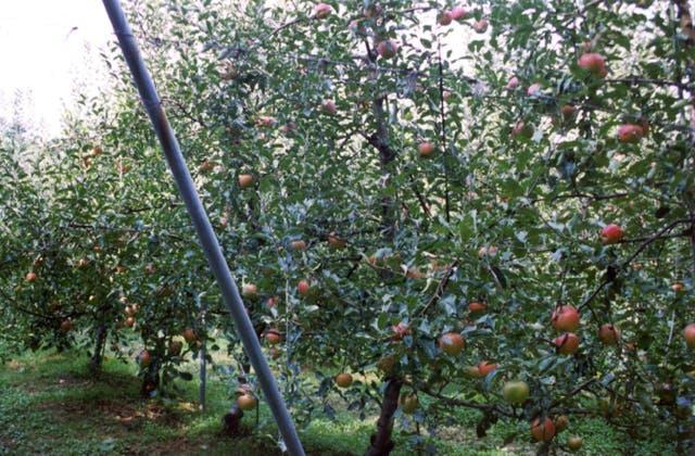 八木山観光りんご園
