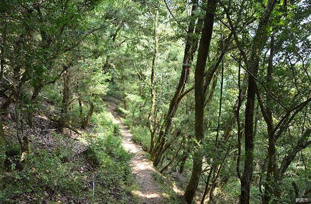 古処山ツゲ原始林