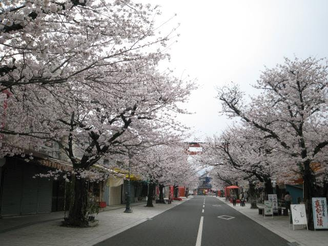 祐徳門前商店街と桜