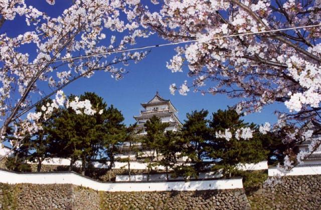 島原城堀端の桜