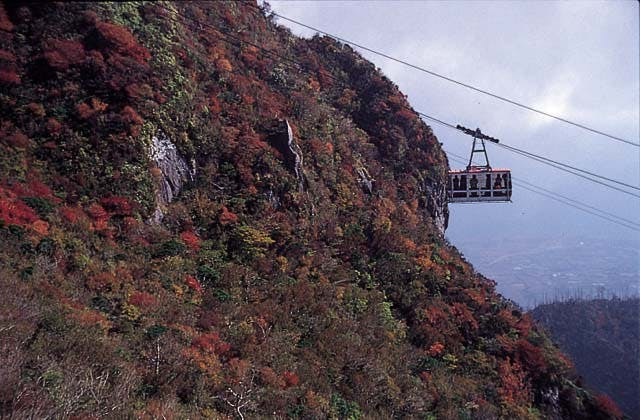 普賢岳の紅葉樹林