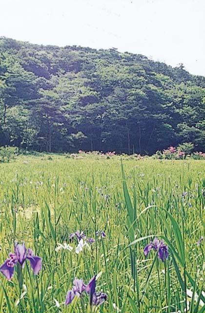 原生沼の植物群落