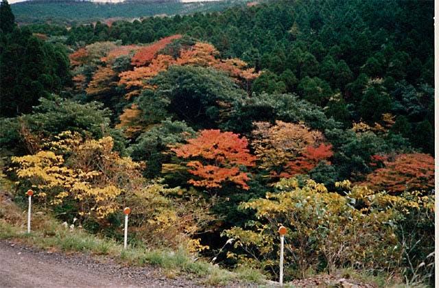 国見山一帯の広葉樹