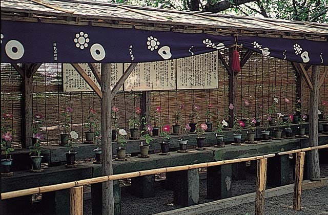 熊本城の肥後六花