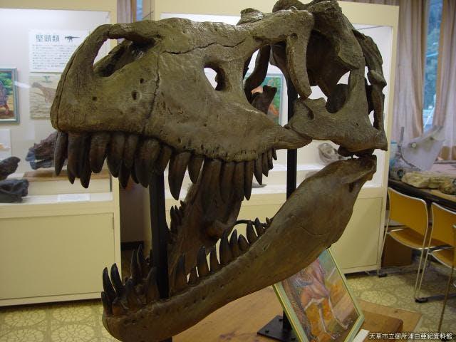 御所浦白亜紀資料館展示室の恐竜化石