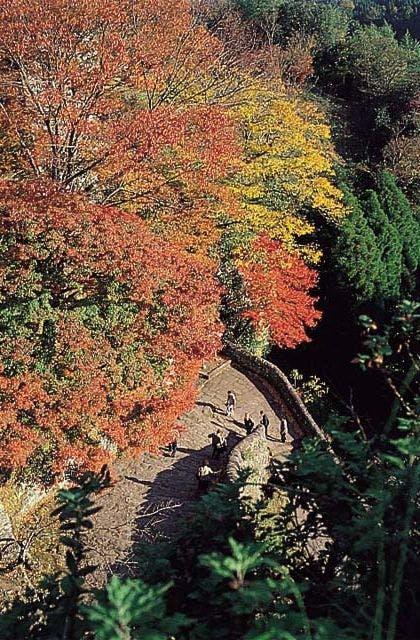 岡城阯の紅葉