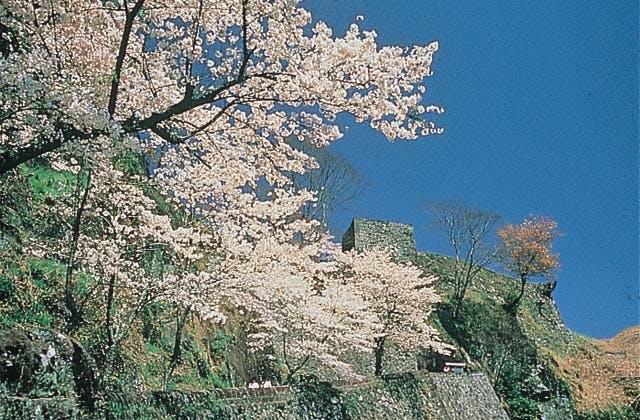 岡城阯の桜