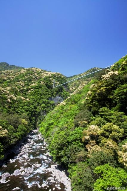 綾川渓谷、照葉樹林と大吊橋