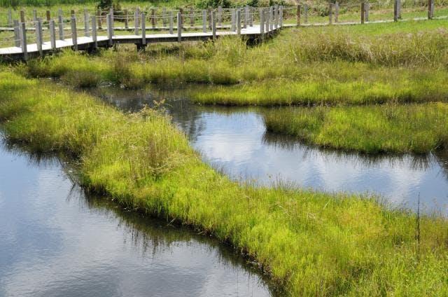 川南湿原植物群落2