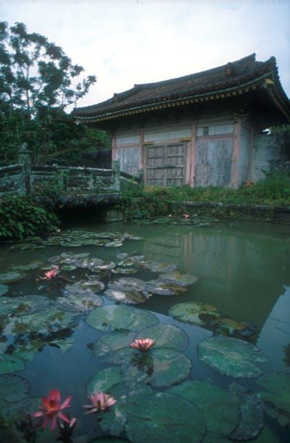 円覚寺跡のスイレン
