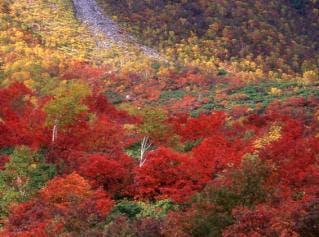 イワオヌプリ紅葉