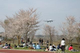 さくらの山の桜