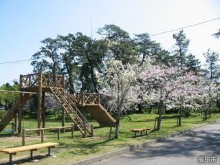 甚兵衛公園の桜
