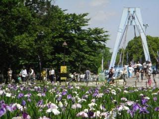 水元公園の花菖蒲