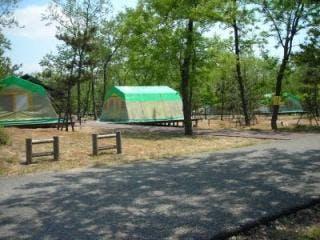 新潟市海辺の森キャンプ場その1