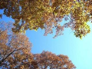 大崎山公園2