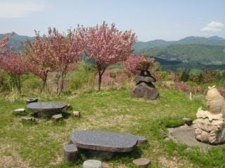 林道途中の谷川新田では、春になると八重千本桜を見ることができ