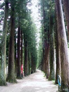 眼目山立山寺栂並木