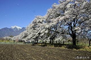 眞原桜並木と甲斐駒ヶ岳