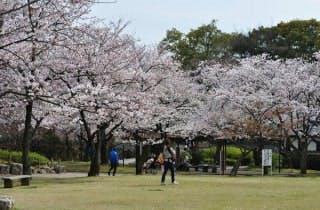 清洲公園の桜
