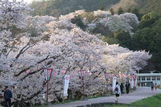 尾関山公園の桜