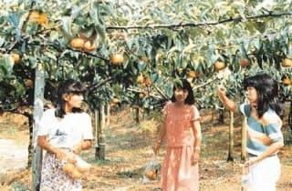 瀬田農園/なし・ぶどう・りんご