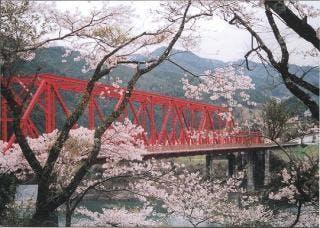奥物部湖の桜
