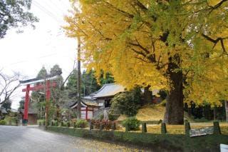 旗山神社とイチョウ