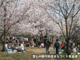 橘神社公園の桜
