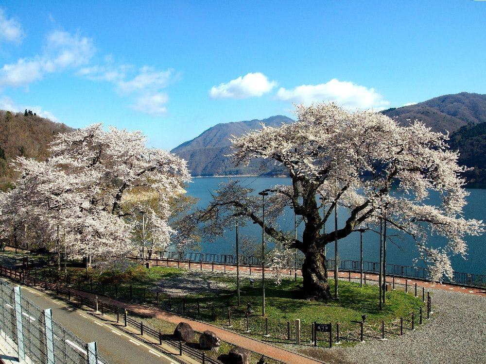 荘川観光協会