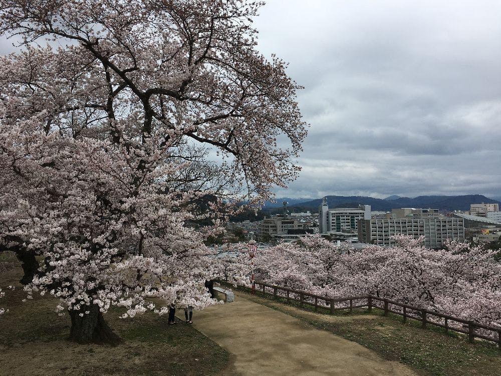 (一社)鳥取市観光コンベンション協会